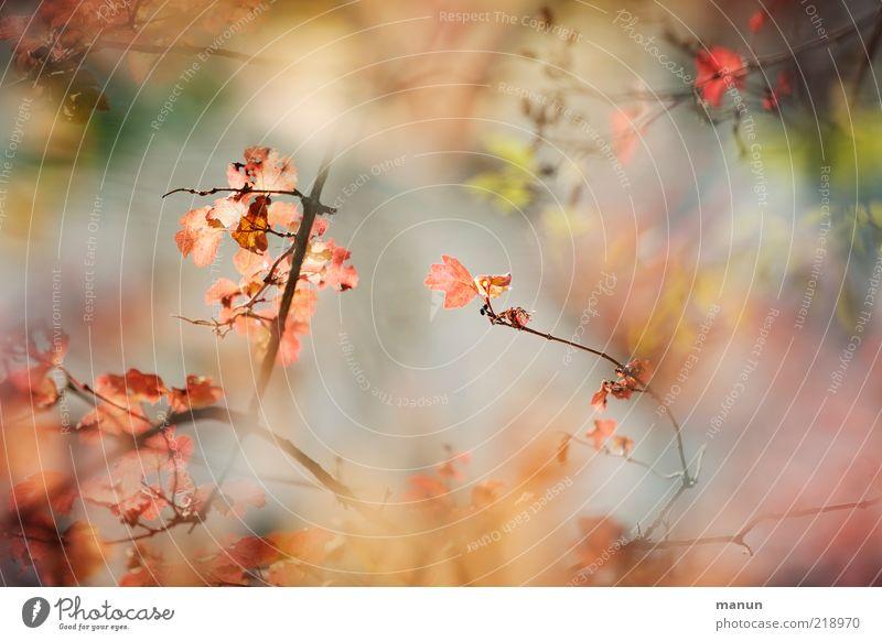 Japanese Garden Natur Herbst Pflanze Sträucher Blatt Herbstlaub Herbstfärbung herbstlich Herbstbeginn Schönes Wetter authentisch außergewöhnlich fantastisch