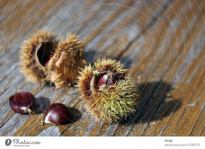 Esskastanien ... Umwelt Natur Pflanze Herbst Schönes Wetter Wildpflanze Frucht Maronen Park Holz liegen dehydrieren einzigartig klein lecker natürlich stachelig