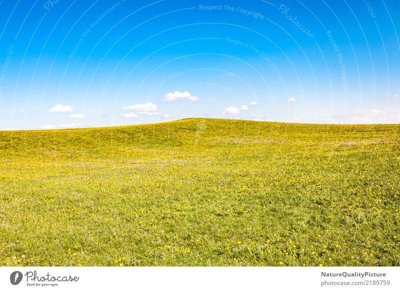 dandelion field Natur Ferien & Urlaub & Reisen Pflanze Sommer Landschaft Blume Erholung ruhig Ferne Berge u. Gebirge Leben Wärme Umwelt Lifestyle Blüte Frühling