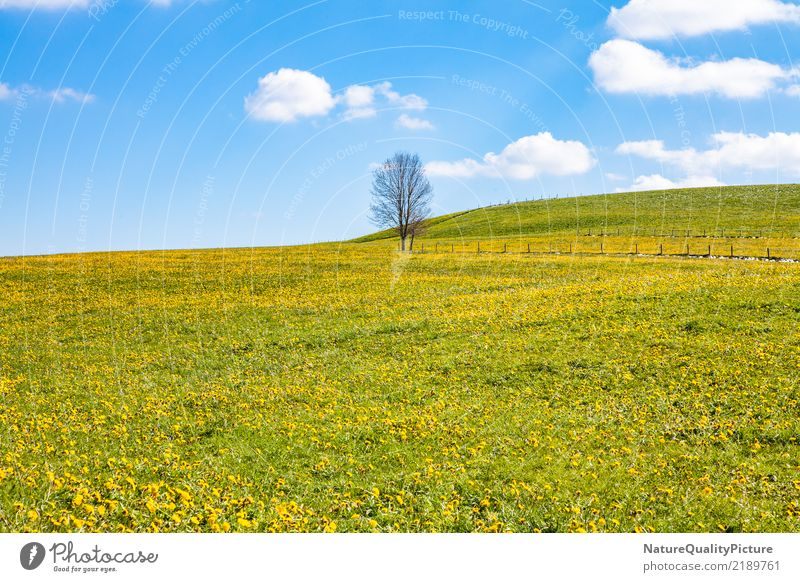 spring meadow Natur Ferien & Urlaub & Reisen Sommer Erholung Einsamkeit Freude Berge u. Gebirge Leben gelb Hintergrundbild Gefühle natürlich