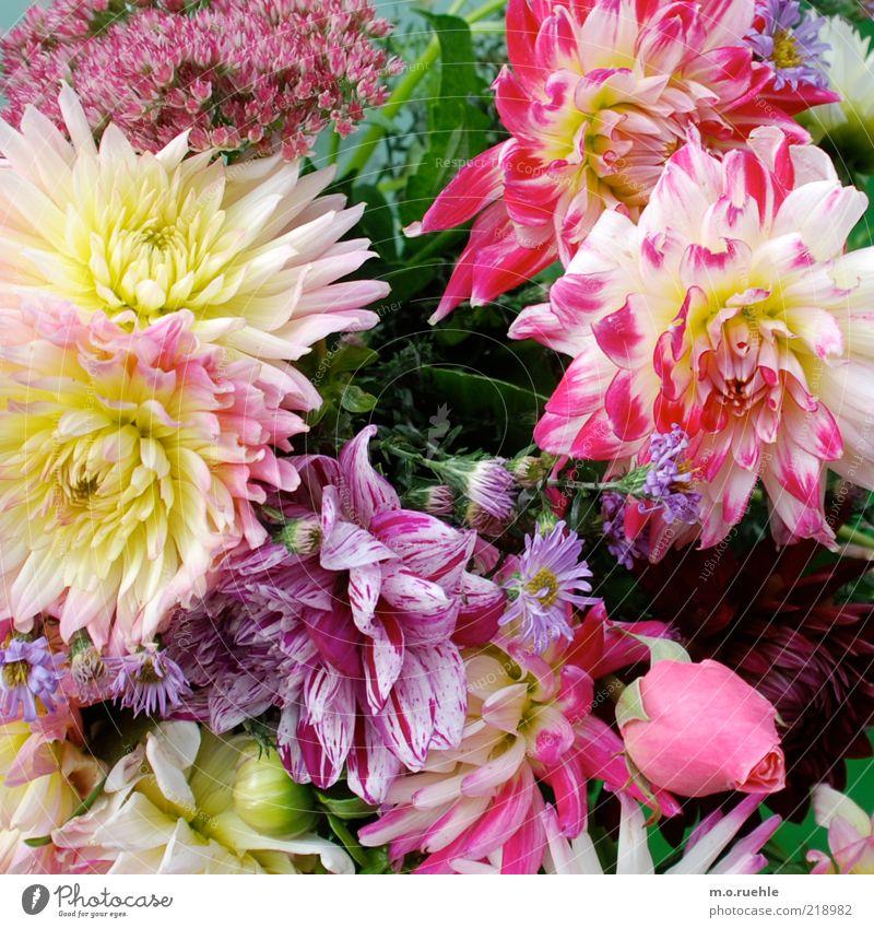 ein guter schnitt Pflanze Sommer Rose Blatt Blüte Grünpflanze ästhetisch Duft frisch schön mehrfarbig gelb grün violett rosa Gefühle Romantik Blumenstrauß