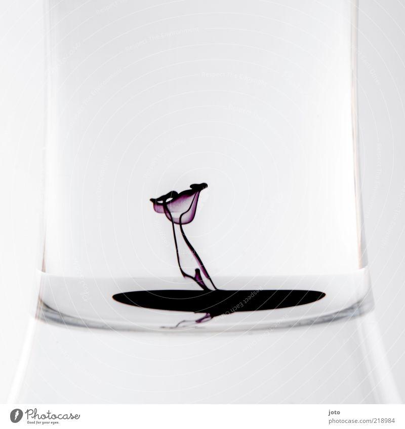 """""""Er sah nichts als die Blume ... Wasser Pflanze ruhig Stil Blüte Farbstoff Kunst Glas Design elegant modern ästhetisch abstrakt Wachstum Tropfen"""
