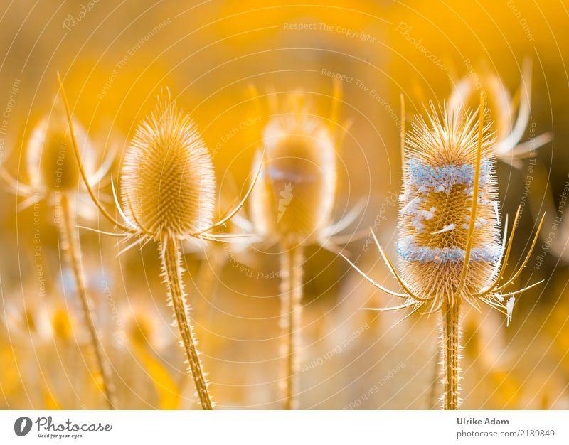 Lichtspiel Natur Pflanze Sommer Erholung ruhig Leben Wärme Herbst Garten orange Zufriedenheit Park leuchten glänzend Dekoration & Verzierung gold