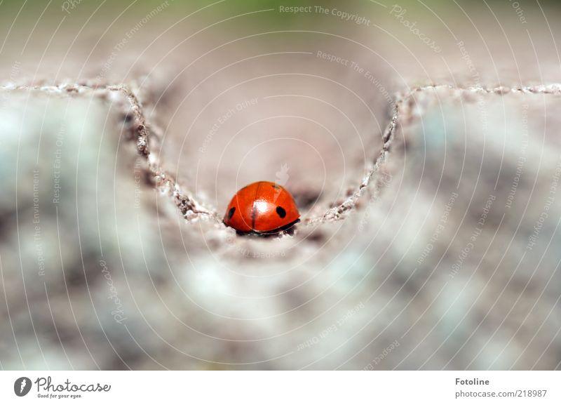 Tschüß! Bis zum nächsten Sommer! Natur rot schwarz Tier hell klein Umwelt Insekt natürlich Wildtier Käfer Marienkäfer