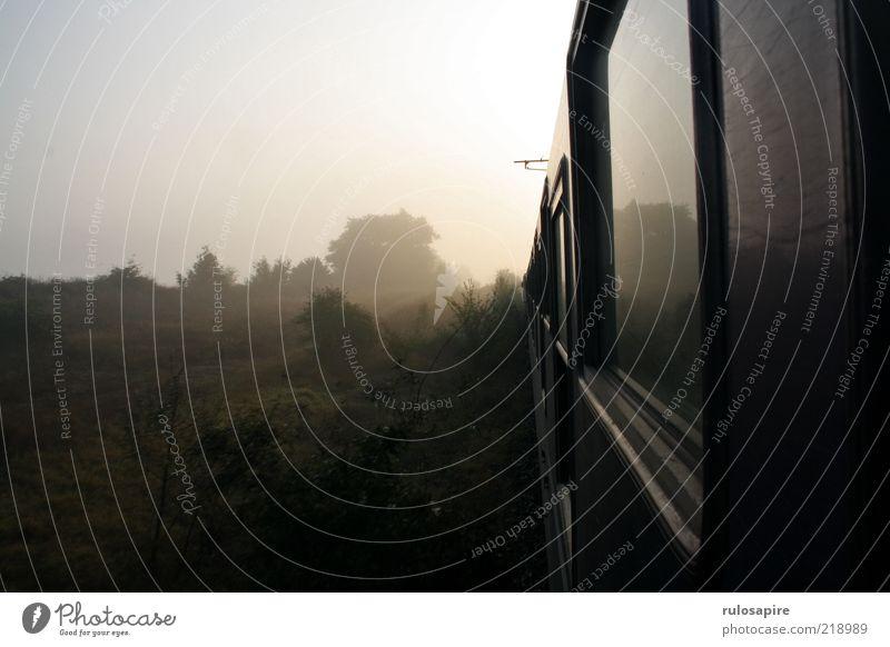 early morning Baum Pflanze Sommer Ferien & Urlaub & Reisen Erholung kalt Wiese Landschaft grau braun Nebel Eisenbahn Sträucher Gleise Fernweh Türkei