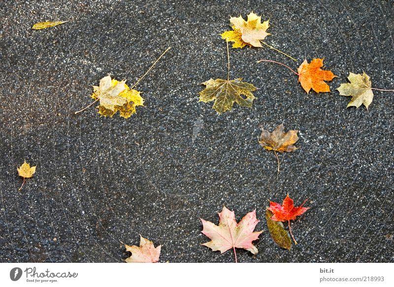 macht die Straßen bunter Herbst schlechtes Wetter Wind Blatt Wege & Pfade dunkel mehrfarbig gelb gold grau rot Herbstlaub herbstlich Herbstfärbung Herbstbeginn