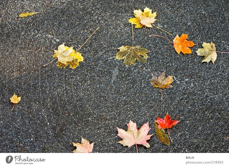 macht die Straßen bunter Mensch rot Blatt gelb dunkel Herbst grau Wege & Pfade Wind gold trist Boden liegen Asphalt fallen