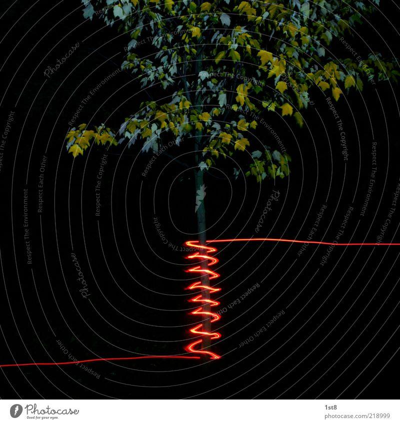 bioinduktion Baum Pflanze rot verrückt neu außergewöhnlich Baumstamm bizarr Kontrast trendy Spirale Low Key Illumination Ahorn Lichterkette
