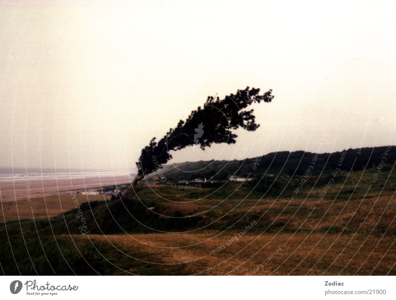 vom Winde verweht Baum Sturm Frankreich Normandie Omaha Beach