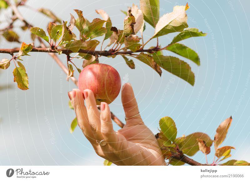 one apple a day Lebensmittel Frucht Apfel Ernährung Essen Sport Fitness Sport-Training Mensch feminin Frau Erwachsene Hand Finger 1 Umwelt Natur Pflanze Tier