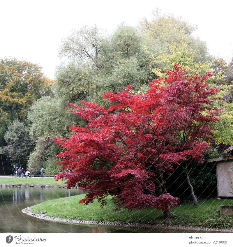 Roter Oktober Natur Baum rot Erholung Herbst Menschengruppe Park Umwelt Spaziergang Seeufer Teich