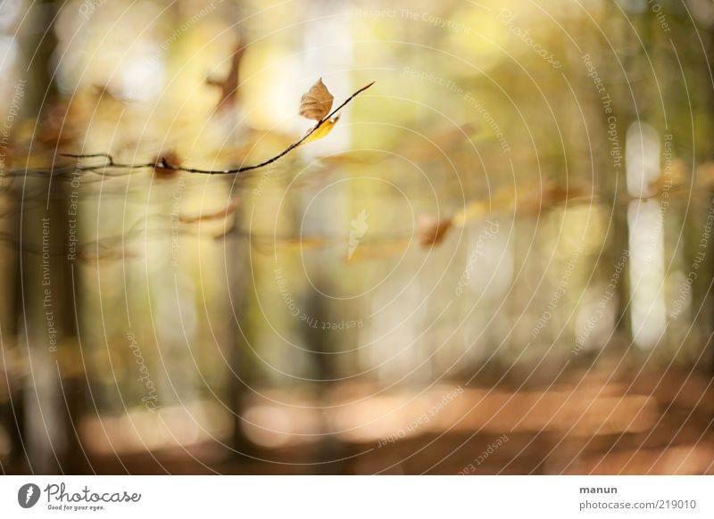 Herbstwald Natur schön Baum Blatt Wald Landschaft außergewöhnlich Schönes Wetter Originalität Herbstlaub Zweige u. Äste herbstlich Herbstfärbung Herbstwetter