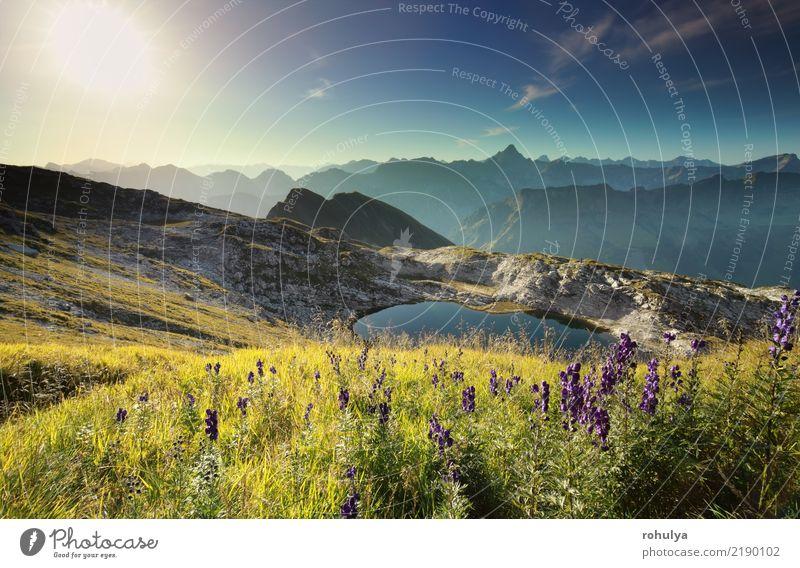 Wildblumen auf Hügel durch alpinen See bei Sonnenaufgang, Deutschland Himmel Natur Ferien & Urlaub & Reisen Pflanze blau Sommer Landschaft Blume