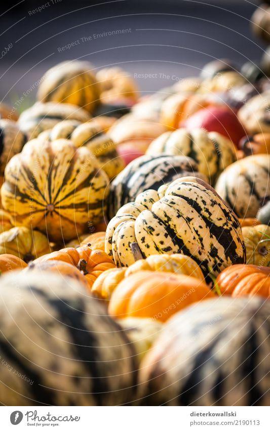 Kürbis Lebensmittel Gemüse Frucht Ernährung Essen Gesundheit vitaminreich Vitamin Bioprodukte Biologische Landwirtschaft Außenaufnahme
