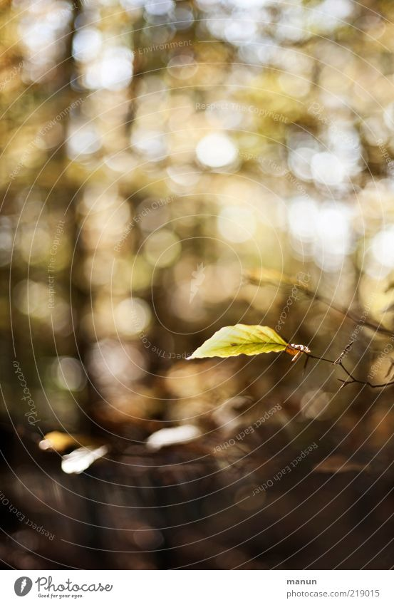 das letzte Blatt Natur schön Blatt Wald Herbst authentisch Wandel & Veränderung Vergänglichkeit fantastisch natürlich Schönes Wetter Zweig Originalität Herbstlaub Zweige u. Äste herbstlich