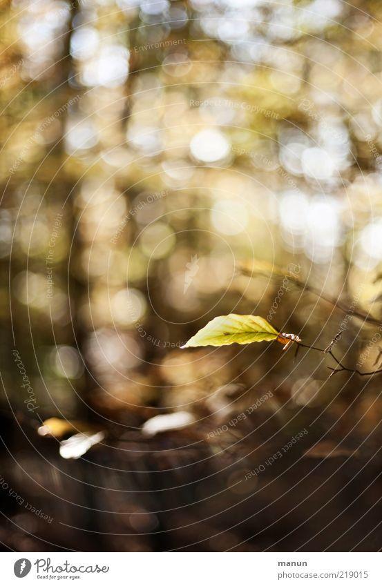 das letzte Blatt Natur schön Wald Herbst authentisch Wandel & Veränderung Vergänglichkeit fantastisch natürlich Schönes Wetter Zweig Originalität Herbstlaub