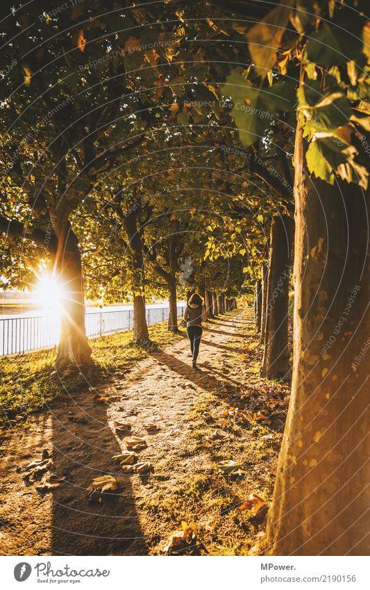 herbstspaziergang Freizeit & Hobby Ausflug Abenteuer wandern Mensch feminin Junge Frau Jugendliche 1 Natur Schönes Wetter Park Wald schön Gefühle Herbst