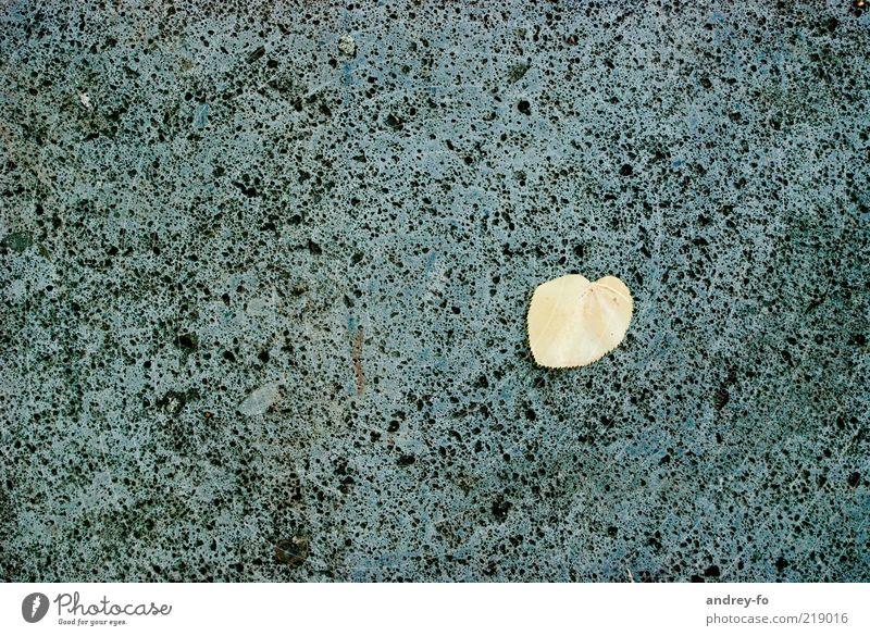 Herbst Natur Blatt gelb grau Stein herbstlich Herbstlaub Herbstwetter Boden porig Lindenblatt kalt Jahreszeiten Farbfoto Gedeckte Farben Außenaufnahme Muster