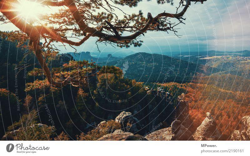 sächsische schweiz Umwelt Gegenlicht Sonne Sonnenstrahlen Baum Natur Landschaft Nebel Felsen Berge u. Gebirge Gipfel Schlucht schön Sächsische Schweiz Wald