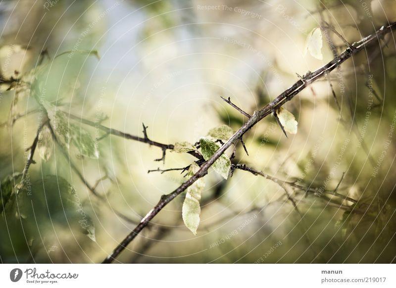 stachelig Natur schön Blatt Herbst hell Perspektive Wandel & Veränderung Vergänglichkeit fantastisch Spitze natürlich Originalität stachelig Stachel Herbstlaub
