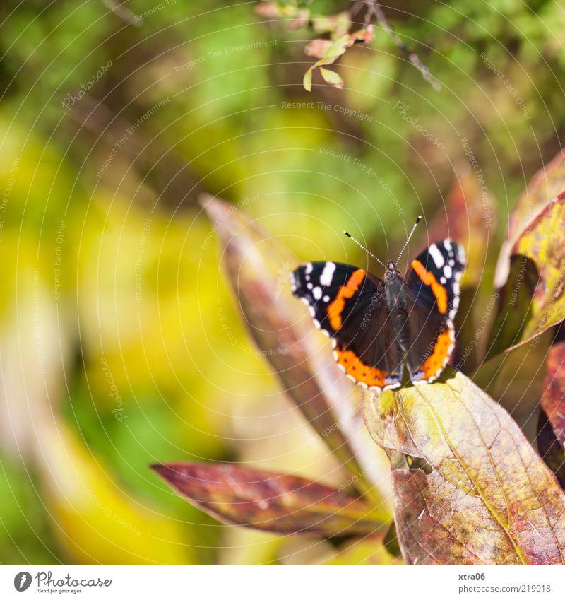 hier scheint die Sonne Natur Pflanze Tier Frühling Sommer Blatt Schmetterling 1 ästhetisch Farbfoto Außenaufnahme Nahaufnahme Morgen Tag Sonnenlicht Tierporträt
