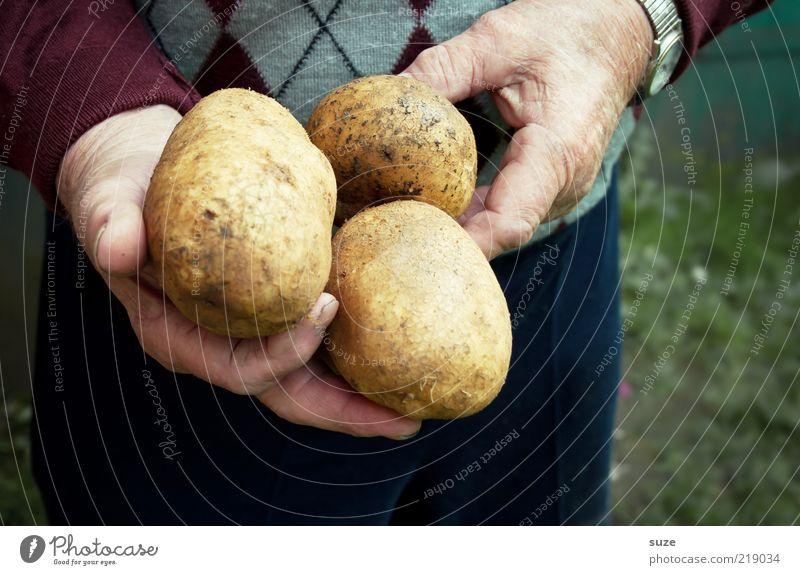 Dicke Dinger Hand Senior Lebensmittel festhalten Gemüse dick Ernte Landwirt Pullover Bioprodukte altmodisch Landwirtschaft roh Kartoffeln Armbanduhr