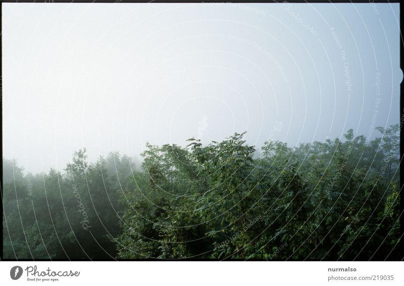 dahinter Nebel Natur Landschaft Pflanze Sommer Klima Urwald kalt grün Nebelhorn (Berg) schlechtes Wetter Gedeckte Farben Morgen Morgendämmerung Licht