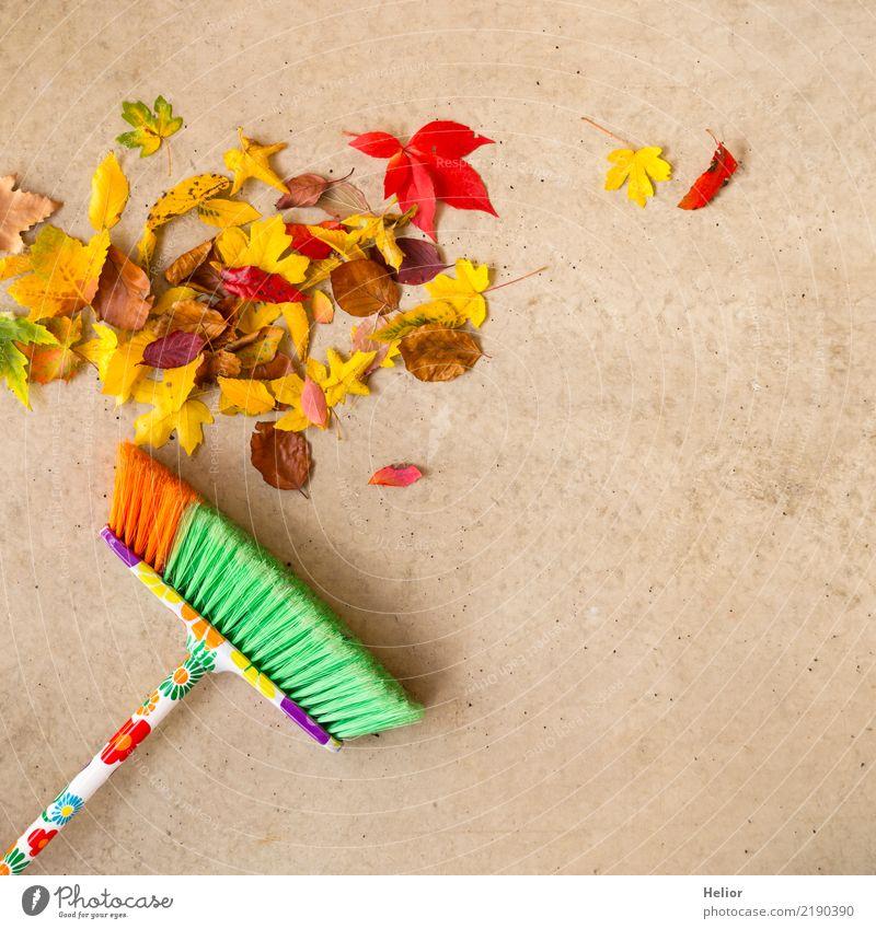 Herbstliche Putzaktion mit trockenem, farbigem Laub Garten Natur Baum Park Beton Reinigen Sauberkeit gelb grau grün rot Ordnungsliebe Reinlichkeit