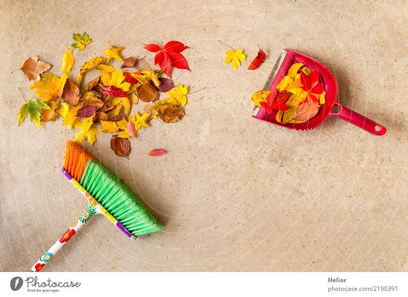 Herbstliche Putzaktion mit trockenem, farbigem Laub Natur Pflanze grün rot Blatt gelb Hintergrundbild Garten grau Park Ordnung Beton Bodenbelag Reinigen