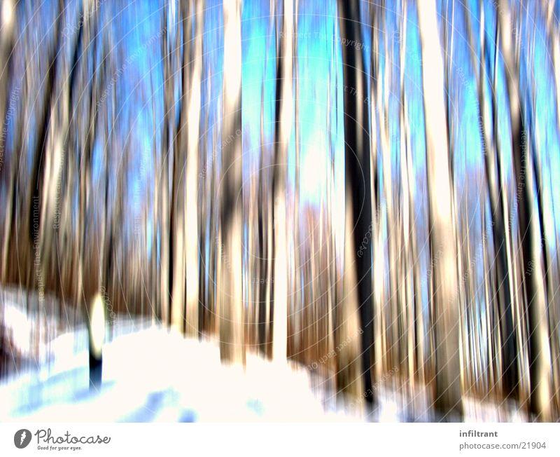 verzerrter Wald Baum Winter Wald kalt Schnee Baumstamm Verzerrung