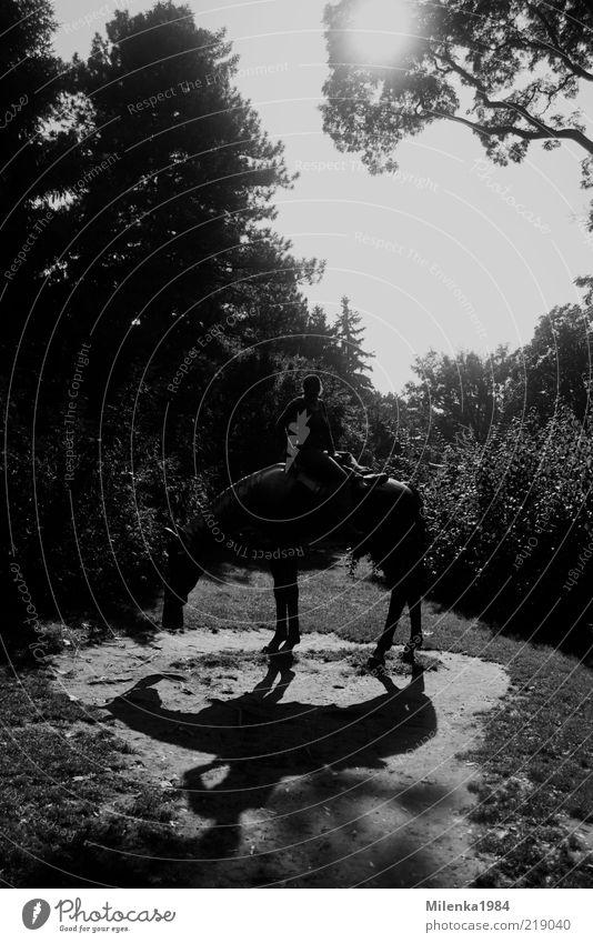 Lonesome rider Mensch Baum Sonne Freude Tier Landschaft sitzen Abenteuer Pferd Kontakt Tanne Zusammenhalt Figur Reitsport Reiten Reiter