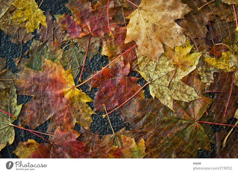 Matsch Natur Blatt Umwelt Straße Herbst Gefühle Wege & Pfade liegen dreckig authentisch nass Jahreszeiten Straßenbelag feucht Herbstlaub herbstlich