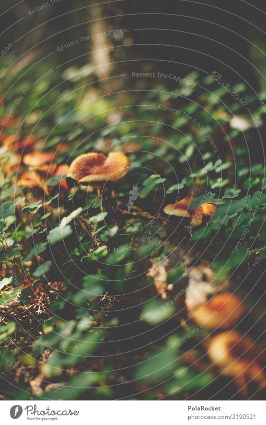 #AS# Sächsischer Pilz Umwelt Natur Pflanze ästhetisch Herbst Wald Waldboden grün braun Pilzhut Pilzkopf Wegrand Farbfoto Gedeckte Farben Außenaufnahme