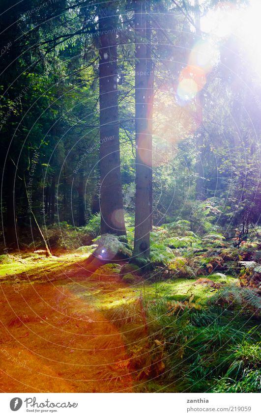 Licht Natur grün Pflanze rot Sommer ruhig Wald Umwelt Landschaft Stimmung Hoffnung Wandel & Veränderung leuchten Idylle Baumstamm Optimismus