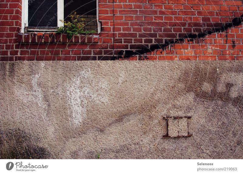 Fensterplatz Pflanze Blume Grünpflanze Haus Ruine Gebäude Mauer Wand Backstein alt dreckig dunkel kaputt trist stagnierend Fensterscheibe Fensterbrett