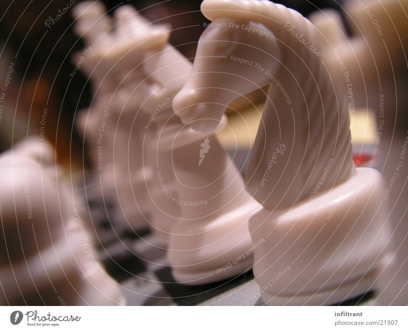 Schach Brettspiel Pferd Schachfigur weiß Spielen Freizeit & Hobby Makroaufnahme Nahaufnahme Chess matt