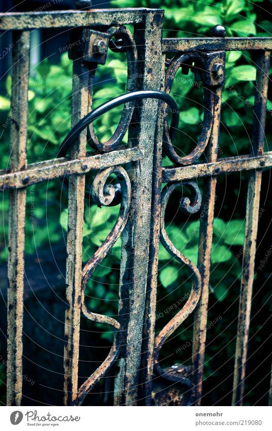Gartentor alt grün Sommer ruhig dunkel Metall Park Zeit braun geschlossen Häusliches Leben Wandel & Veränderung Vergänglichkeit historisch Tor