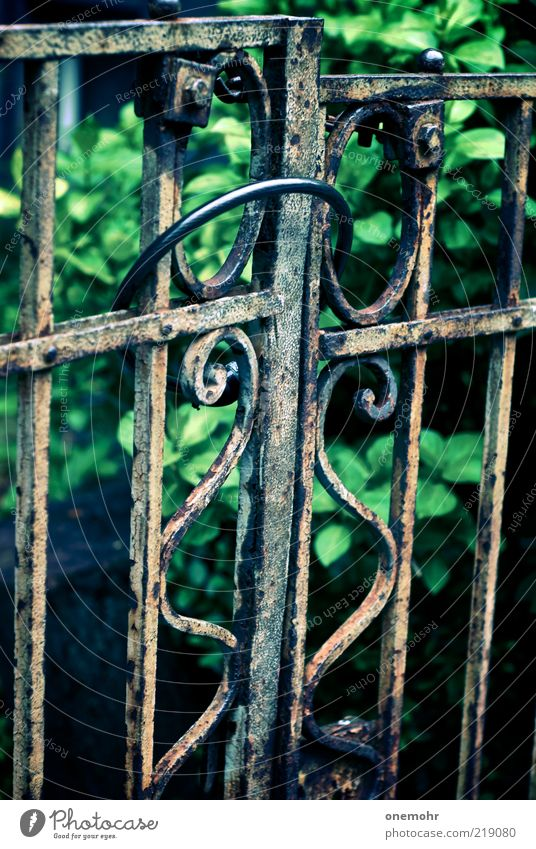 Gartentor Häusliches Leben Sommer Park Tor Metall Stahl Rost alt dunkel historisch braun grün Verfall Vergangenheit Vergänglichkeit Wandel & Veränderung Zeit