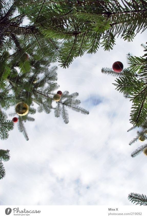 Weihnachtsbäume Weihnachten & Advent Baum Winter Wolken hoch Weihnachtsbaum Ast Tanne Christbaumkugel Weihnachtsdekoration Baumschmuck Glaskugel