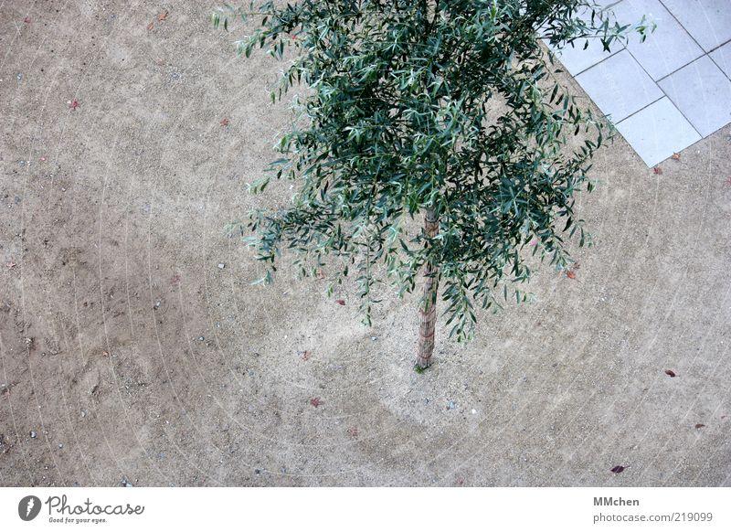 von oben betrachtet ruhig Baum Platz Wachstum eckig Sauberkeit grau grün Zeit Sand Bodenplatten Farbfoto mehrfarbig Außenaufnahme Menschenleer