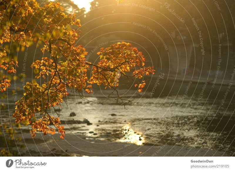 golden Umwelt Natur Flussufer leuchten schön Stimmung frei Herbst Farbfoto Außenaufnahme Menschenleer Dämmerung Schwache Tiefenschärfe Ast herbstlich