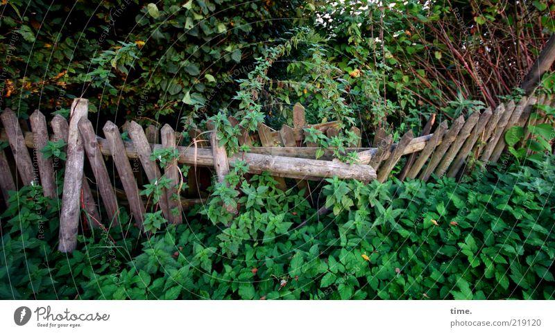 Rückeroberung Natur Garten Gartenzaun Menschenleer Pflanze Querformat umgefallen verrotten gedrückt grün Holz Zaun wild Umwelt Sträucher chaotisch