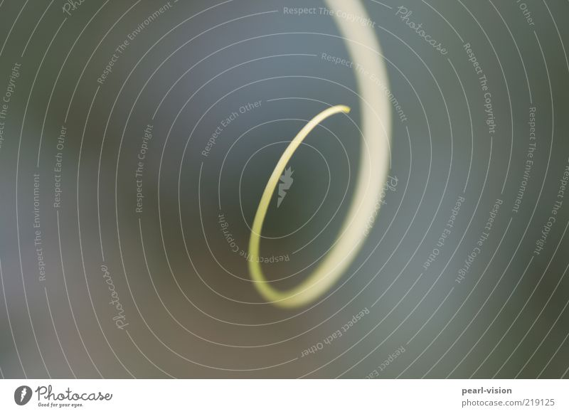 Ranke Natur Pflanze Wachstum Spitze Spirale Kürbisgewächse