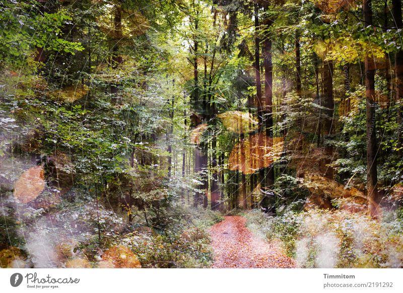 Träumerei. Umwelt Natur Pflanze Herbst Baum Blatt Wald Wege & Pfade einfach natürlich braun gelb grün schwarz Gefühle Doppelbelichtung Vergänglichkeit