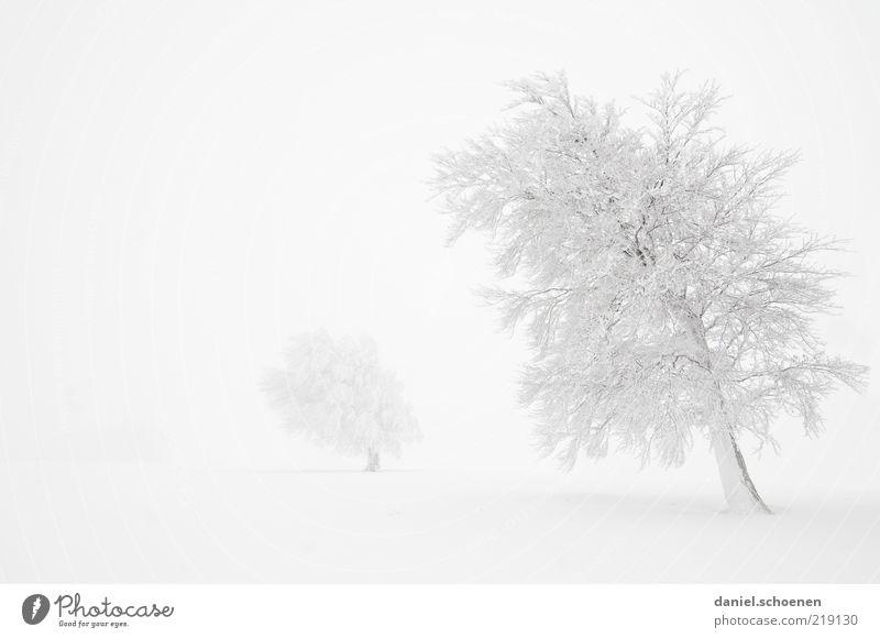 ganz viel weiß Baum Winter Schnee Eis hell Nebel Wind Frost Klima Monochrom traumhaft Schwarzwald Winterstimmung Wintertag
