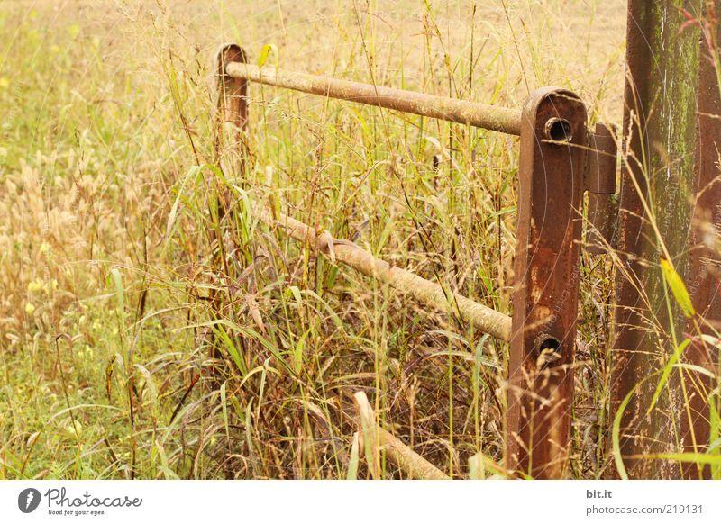 BONANZA Natur alt Pflanze Sommer Wiese Herbst Gras Wärme Landschaft Feld Tür offen Romantik Getreide Tor Landwirtschaft