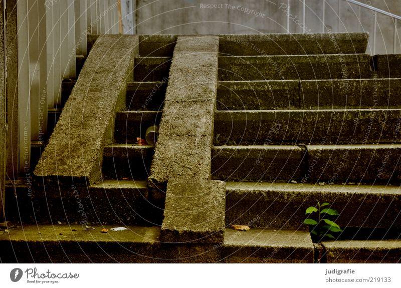 Verrückt alt Pflanze dunkel Gebäude dreckig Architektur Beton verrückt Treppe kaputt Vergänglichkeit Verfall trashig Vergangenheit Bauwerk