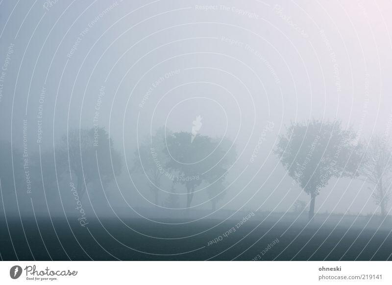 Schlechte Sicht Natur Herbst Wetter Nebel Baum Straße Allee träumen dunkel grau Traurigkeit Trauer Sehnsucht Einsamkeit Gedeckte Farben Textfreiraum oben