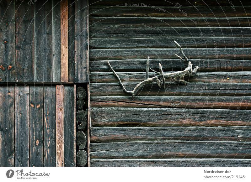 Echse Dekoration & Verzierung Natur Hütte Fassade Holz braun ästhetisch geheimnisvoll Kitsch Kunst nachhaltig Rätsel Holzhaus Skandinavien seltsam Holzfassade
