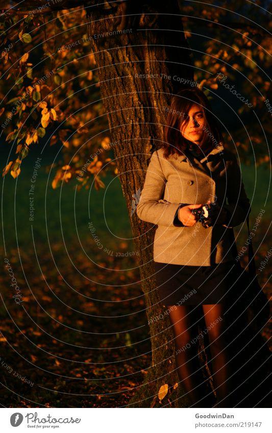 Licht. Frau Mensch Natur Jugendliche schön Baum kalt Wiese Herbst feminin Gefühle Stimmung warten Erwachsene Umwelt